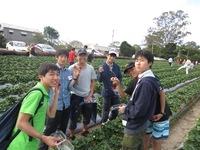 イチゴ摘み①.JPG