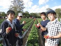 イチゴ摘み③.JPG