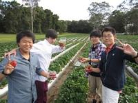 イチゴ摘み.JPG