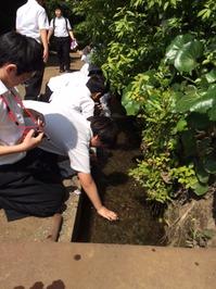 小川寺の中にある「小川新田」の呼び名の元となった用水路.JPG