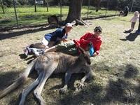 kangarooと一緒にリラックス.JPG